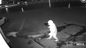 В Китае вор случайно вырубил соучастника кирпичом. Видео