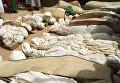 Погибшие в результате стрельбы из-за скота в Африке люди