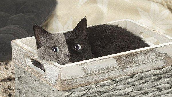 Кошка уникального окраса