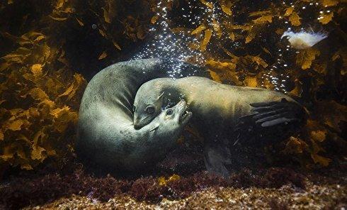 Лучшим профессиональным фотографом в сфере природы был признан Филип Трестон из Австрии