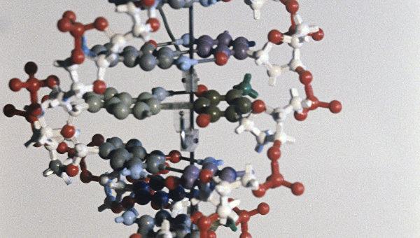 Макет молекулы ДНК