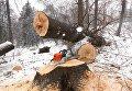 На Закарпатье дерево упало на лесорубов