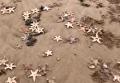 В Великобритании на берег выбросило тысячи морских звезд и крабов. Видео