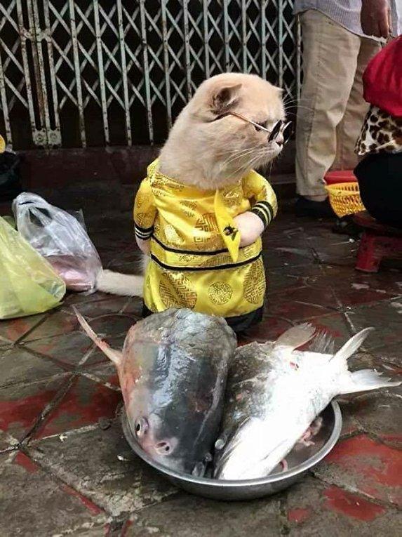 Во Вьетнаме кот в модных нарядах продает рыбу