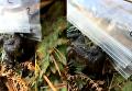 В США нашли живую жабу без головы. Видео