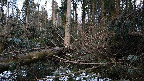 В Украине исчезают леса и парки