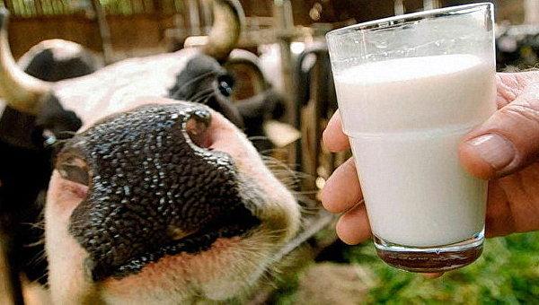 Корова и стакан молока