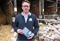 Британский фермер требует убрать из словаря оскорбления свиней