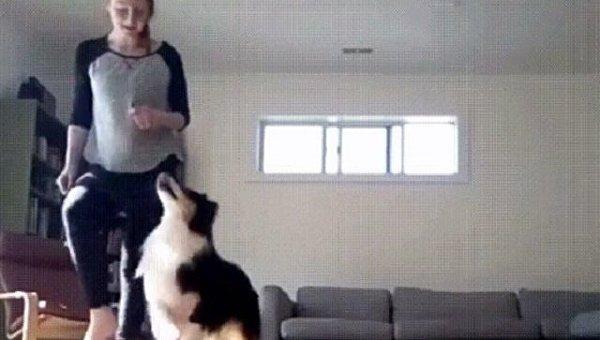 Ирландский танец с собакой