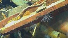 Обломки утонувшего крейсера США найдены в Тихом океане. Видео