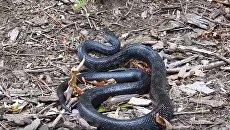 Схватка белки и змеи попала на видео