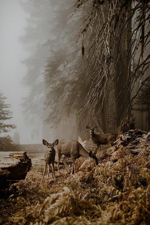 Финалисты фотоконкурса Sony World Photography 2018