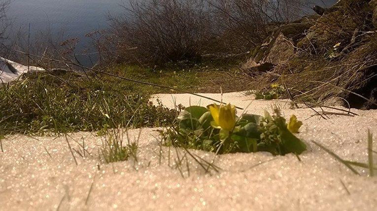 Первые цветы на острове Хортица