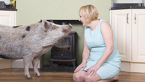 В Англии свинья весом 222 кг живет с семьей, в качестве домашнего питомца