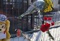 В связи с трагедией в Кемерово киевляне несут цветы под посольство РФ