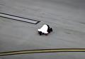 Пилот поцеловал землю после жесткой посадки. Видео