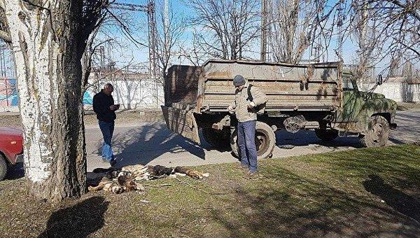 Убийство бродячих собак в Бердянске, 1 апреля 2018