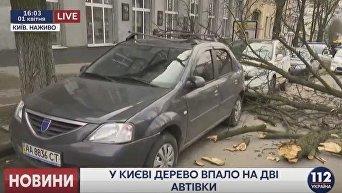 Дерево упало на два автомобиля, припаркованных в центре Киева