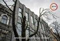 Дерево, поврежденное ветром, в Киеве