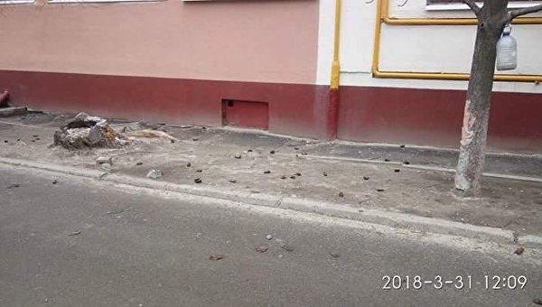Летучие мыши, выброшенные с 16 этажа в Днепре