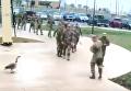 На видео попал момент атаки гуся на военных США. Видео