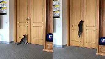 Появилось видео, как Тигр гуляет по ОГА в Днепре. Видео