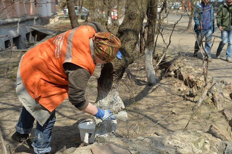 Побелка деревьев в Киеве