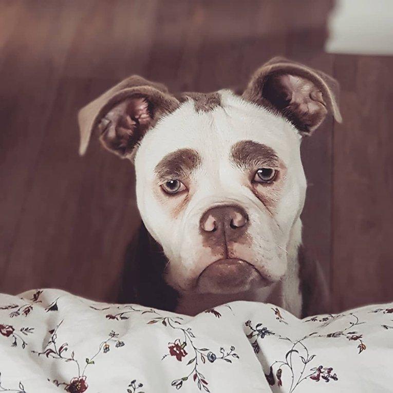 Грустны пес