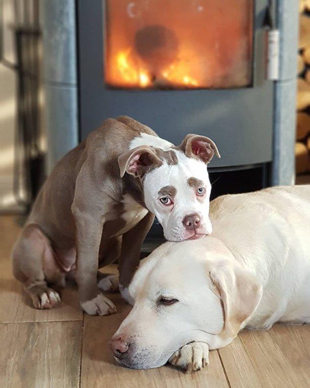 Грустный пес