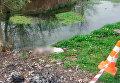 В Черновицкой области мать утопила в реке младенца