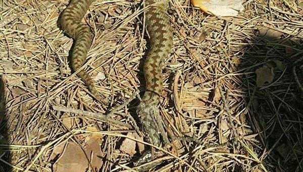 В Киеве жители сообщают о роях змей в парках