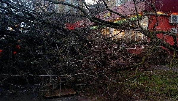 Последствия урагана в Москве, 21 апреля 2018