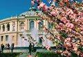 В Одессе зацвела сакура