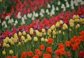 Фестиваль тюльпанов Вокруг света в Киеве