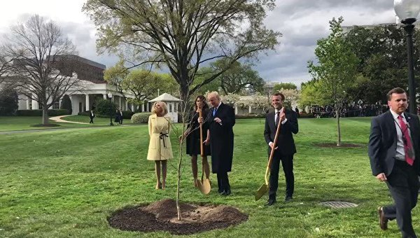 Макрон и Трамп посадили в саду Белого дома саженец дуба дружбы