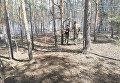 В Луганской области в лесу случился пожар