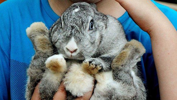 Кролик. Архивное фото