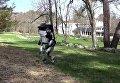 Робот Atlas на пробежке