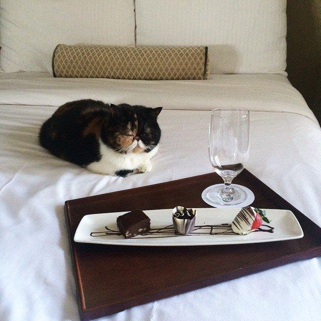 Кошка Пудж – звезда Instagram