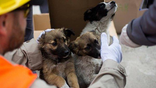Собаки из зоны ЧАЭС