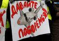 Работники Аэросвита пикетировали администрацию Януковича