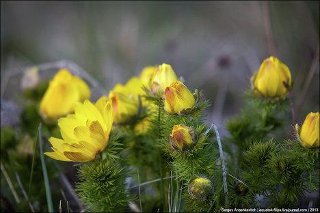 На горе ай петри в крыму цветут