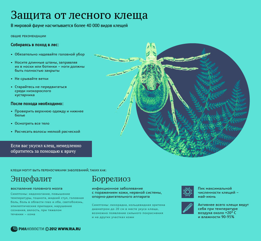 Защита от лесного клеща - инфографика