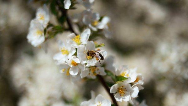 Оса на цветке