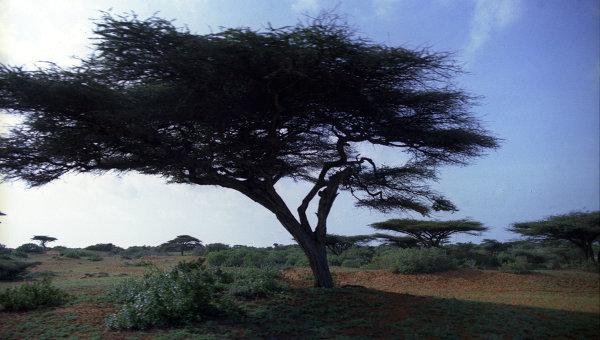 Сомалийский пейзаж
