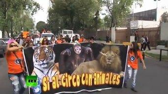 Артисты цирка протестуют против запрета на представления с животными