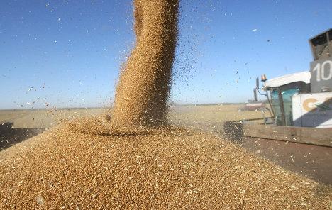 РФ с 1 по 30 июля экспортировала 2,8 млн т зерна, рекорд июля 2011 г. побит