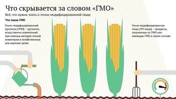 Что скрывается за словом ГМО. Инфографика