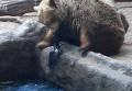Медведь в зоопарке стал спасителем вороны