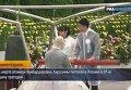 В Хиросиме почтили память жертв атомной бомбардировки. Видео